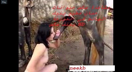 مشاهدة سكس حيوانات حصان مطيع ينيك الهانم فى المزرعة بعنف سكس HD