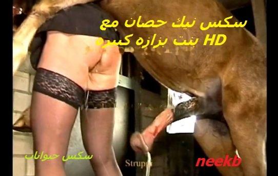 سكس نيك حصان مع بنت بزازه كبيره HD