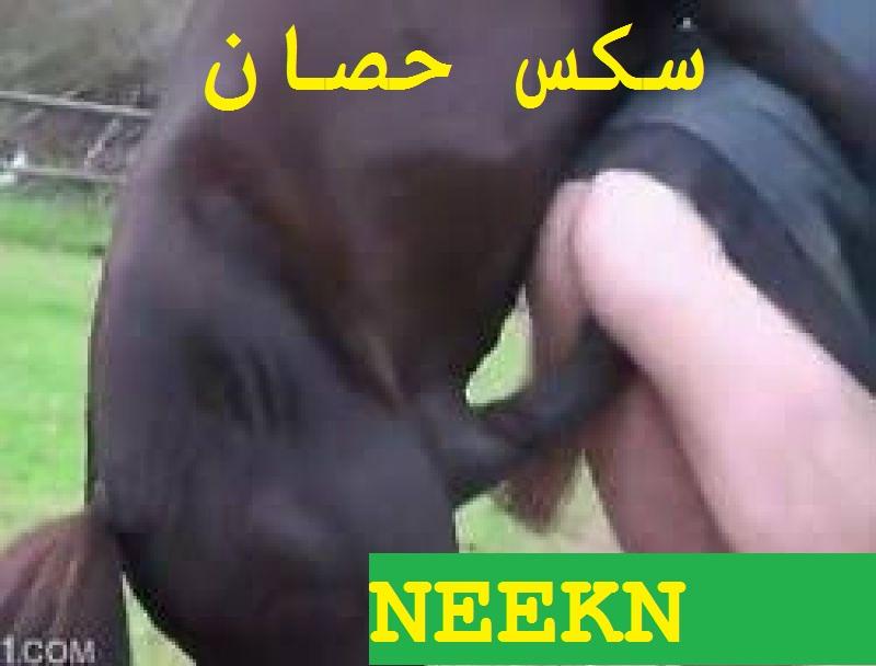 سكس حيوانات حصان ينيك بنت في سن 18